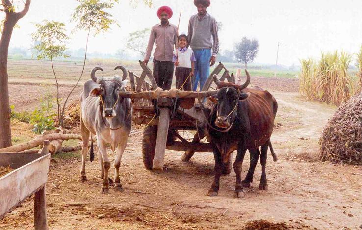 Desi Transport - The Gada!