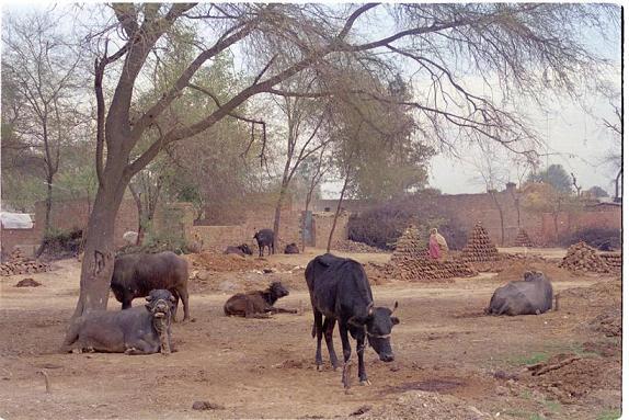 Memories of Punjab - 5