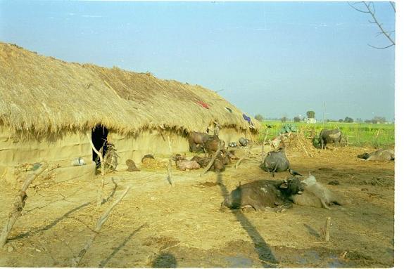 Memories of Punjab - 2