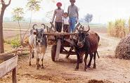 Desi Transport - The Gada!
